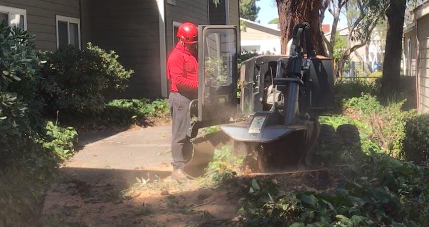stump-grinding
