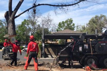 Tree Removals and Stump Grinding
