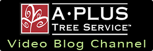 A Plus Tree, Inc