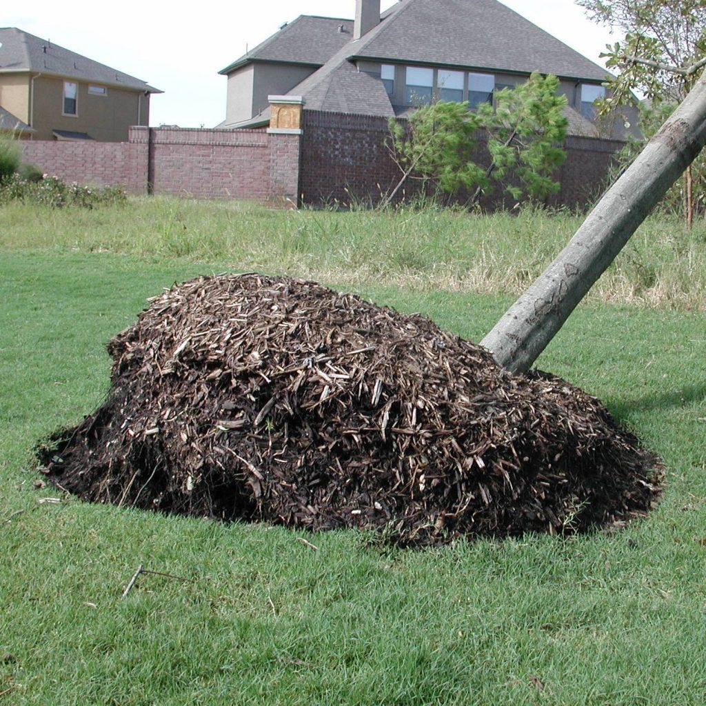 DSCN3923 Hurricane Ike uprooted tree