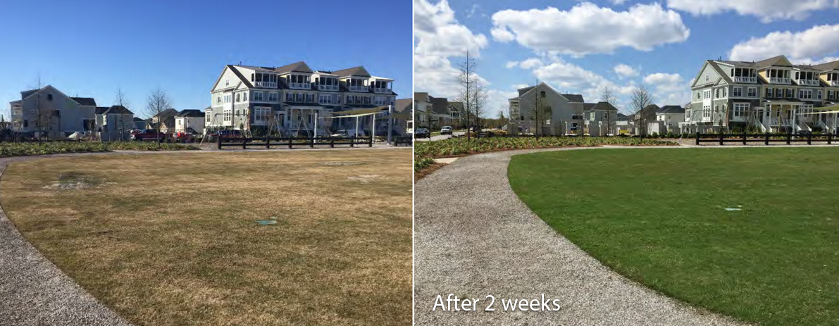 beforeafter-lawn