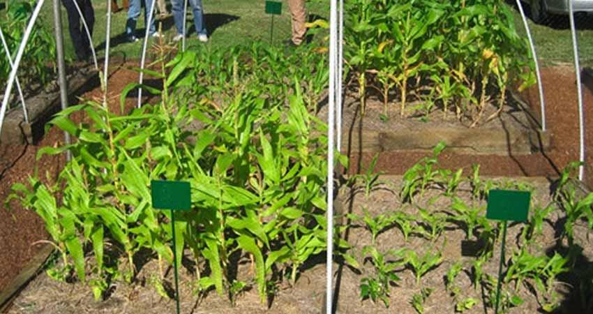 bio-char-vs-soil