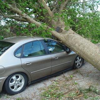 car-tree-1ff3420cd763dd35_large