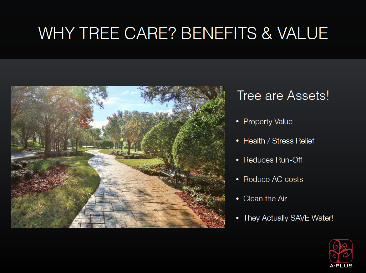 why-tree-care-image
