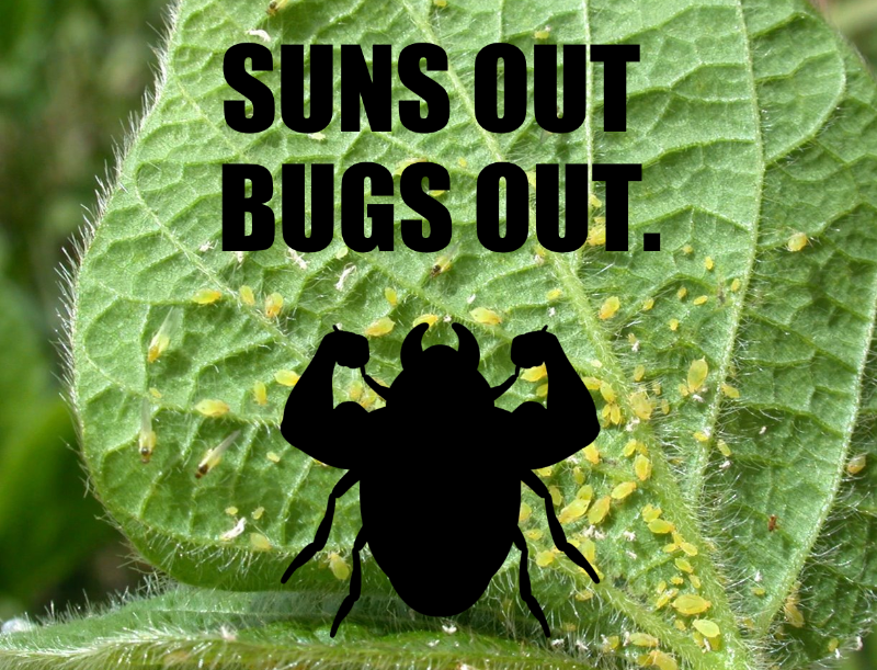 good tree bug and bad tree bugs