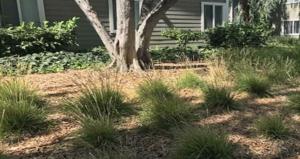 arbor-Mulch-spread