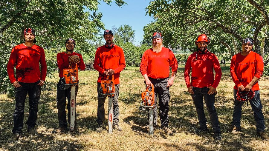 Tree workers, climbers, arborists with chainsaws