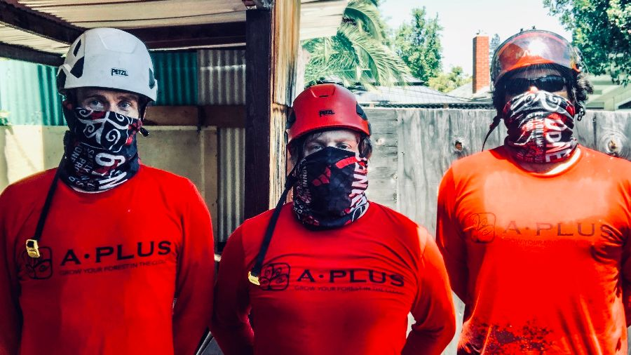 san jose utility crew tree workers, climber, arborist