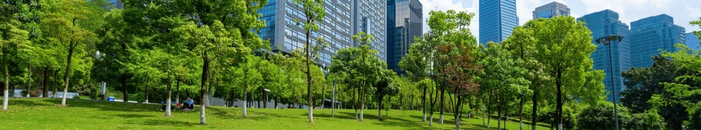 commercial and retail tree service
