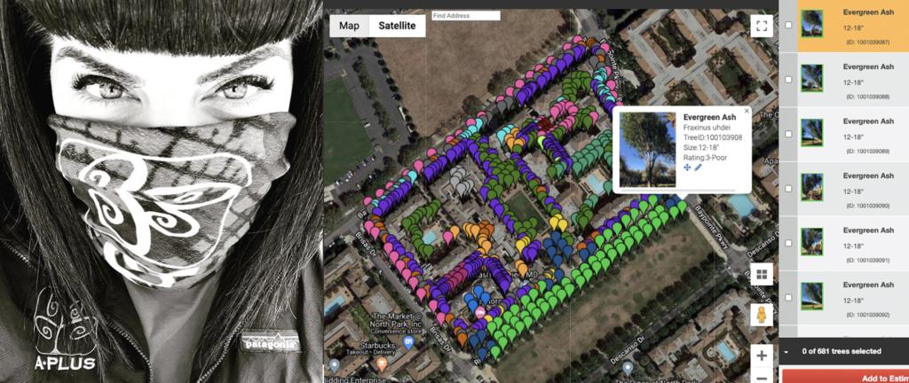 arborist with mask, tree inventory map on arborplus / treezi software