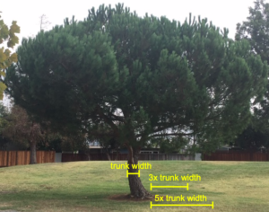 tree root cutting distances