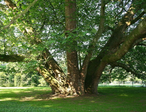 Don't Plant These 5 Tree Species
