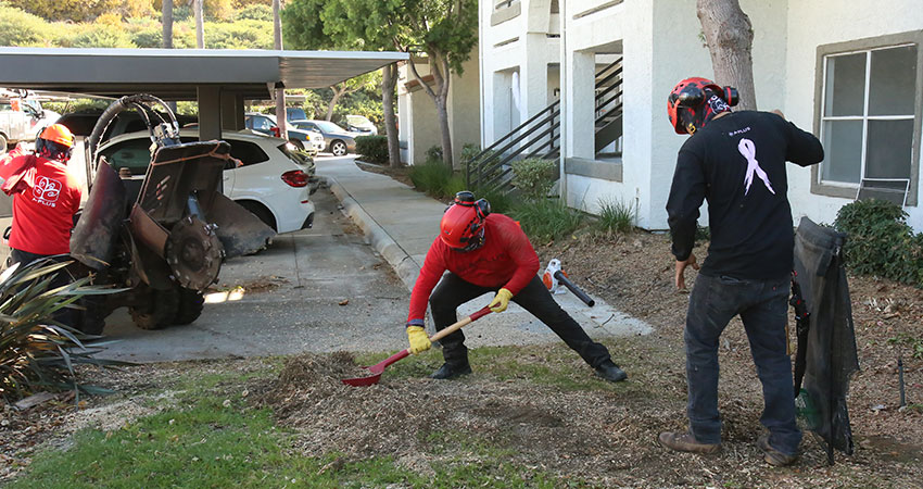 stump-grinding-clearance