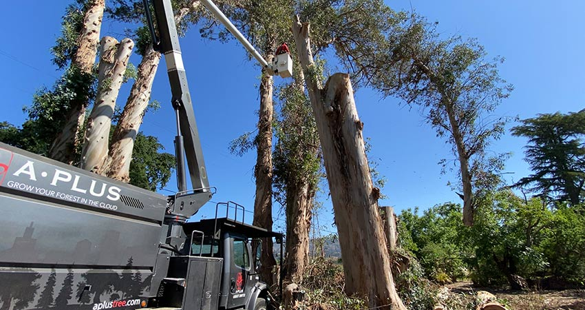 tree-removal-850x450
