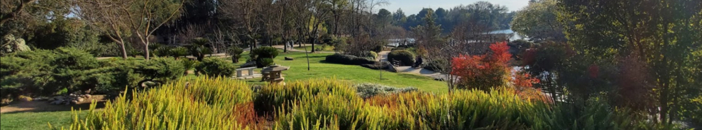 commercial-tree-service-fresno