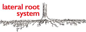 lateral_root_system