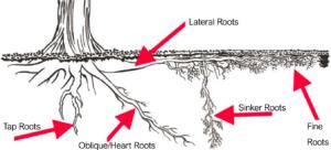 tree_root_types